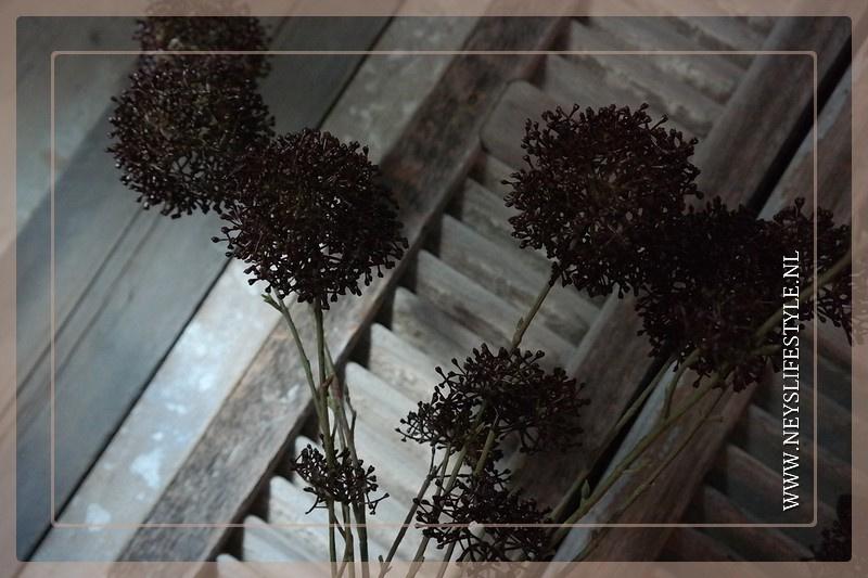 Rutaceae tak kunst bruin | 120 cm