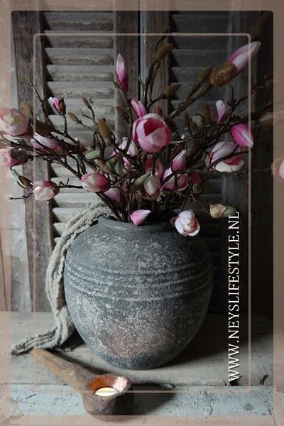 Magnolia tak roze | in knop