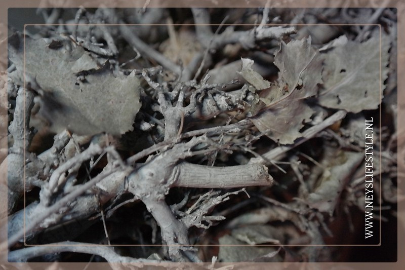 Krans hop  Whitewash | 65 cm