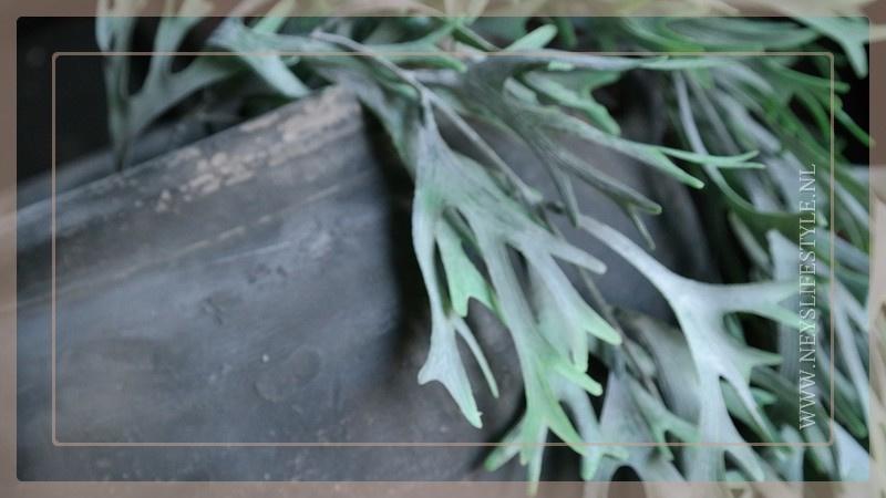 Plant kunst Platycerium/hersthoorn | 78 cm