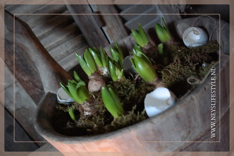Hang eieren aan touw | doosje