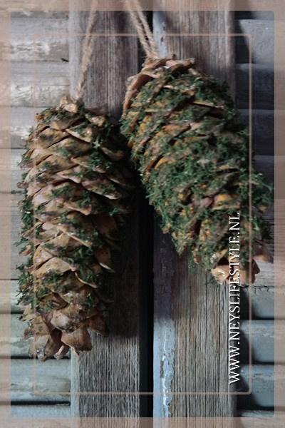 Dennenappel moss | 15-20 cm