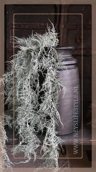 Asparagus kunt tak groen frosted | 105 cm