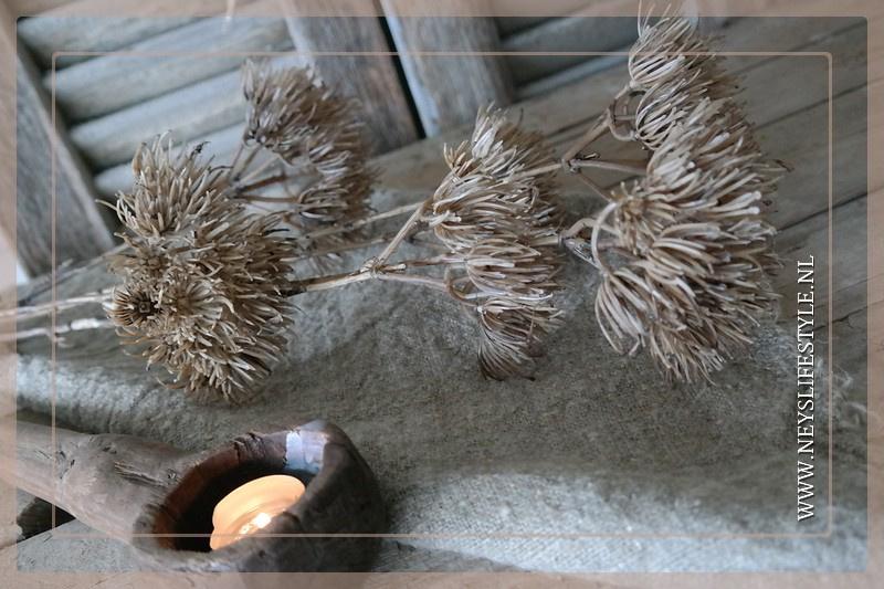 Heracleum tak kunst | 77cm