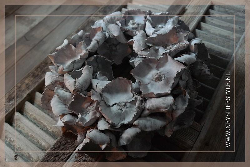 Krans palm cup| whitewash | 45 cm