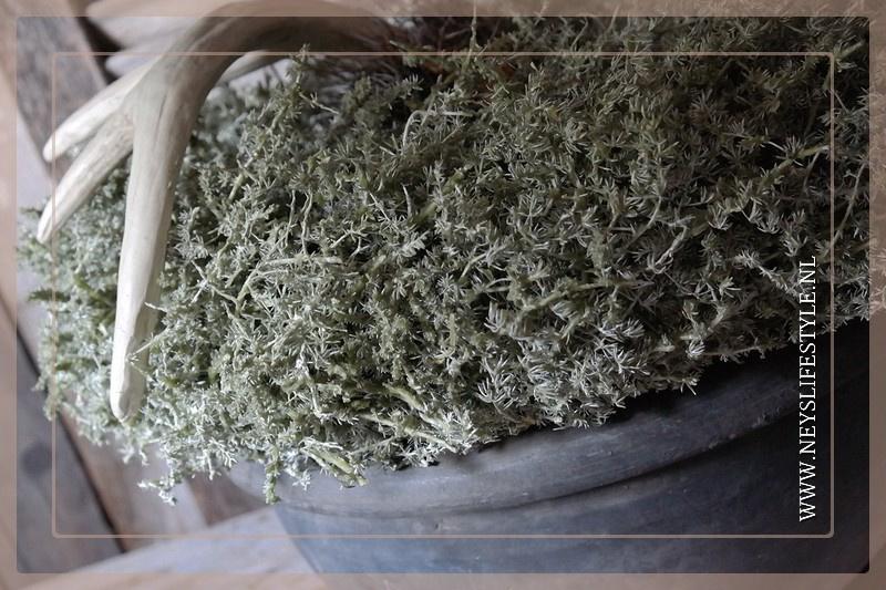 Wild Asparagus krans 45 cm   green waxed
