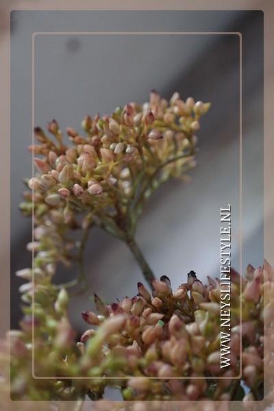 Fuchia tak kunst roze | 52 cm