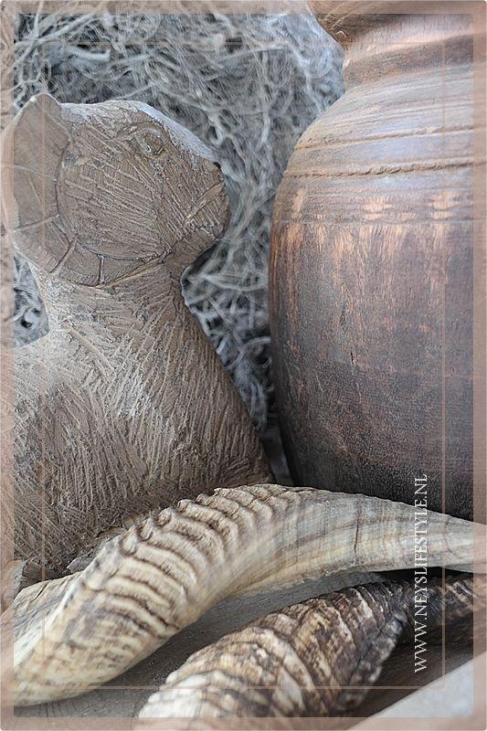 Rams horn 20-25cm