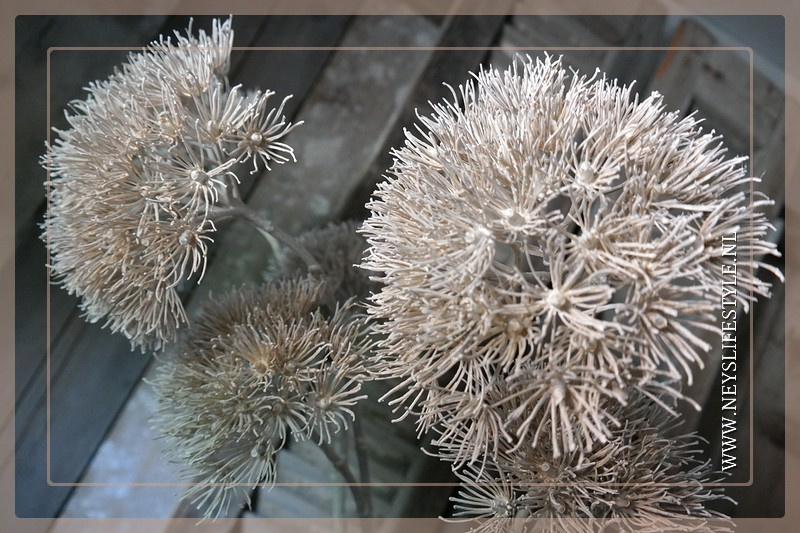 Heracleum tak kunst white | 95 cm