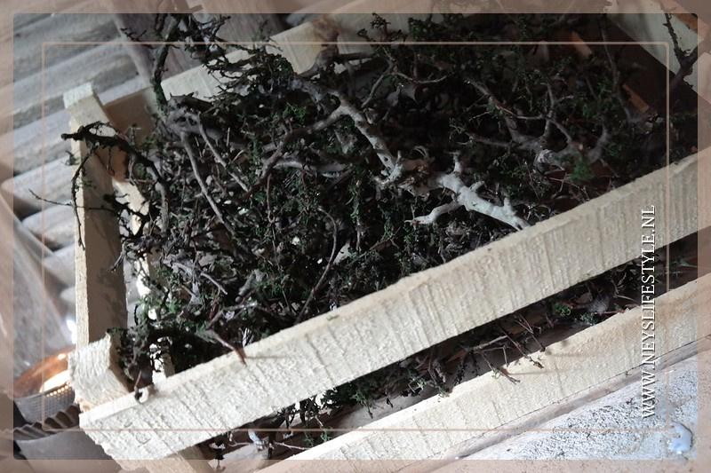 Kistje bonsai takken met mos