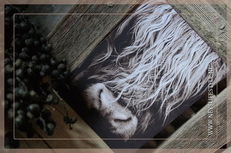 Deco bordje | Buffel