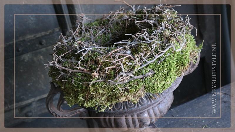 Bonsai mos krans | 30 cm