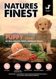 NF puppy 12 kg.