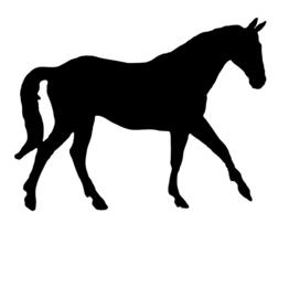 paarden snacks