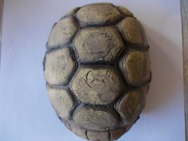 schildpadden caves  ( maat s )