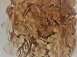 eikenbladeren ( 30 stuks )