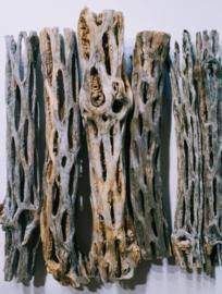 Cholla wood Large