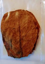 a grade catappa bladeren maat S ( 10 stuks )