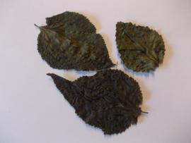 mulberry bladeren ( moerbeibladeren ) 10 stuks