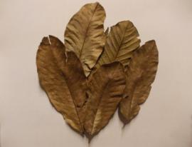 guava bladeren  ( 15 stuks )
