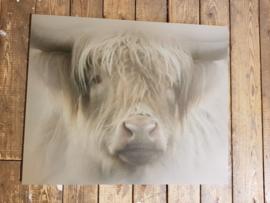 Schilderij Buffel op Hout