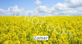 Zomer - T&V