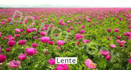Lente - T&V