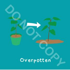 Overpotten (act.)