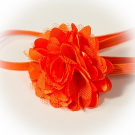 Oranje roesel
