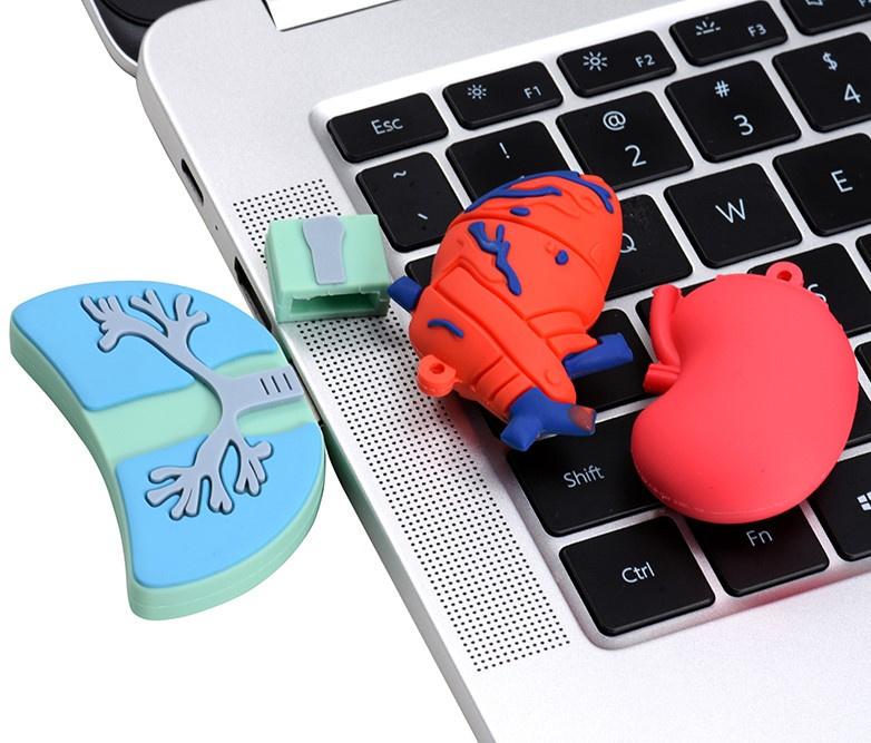 USB Anatomie Nieren 16 GB
