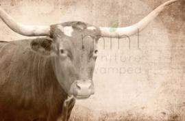 Texas Longhorn - - Mint by Michelle decoupage papier -A3