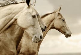 Sepia Horses - Mint by Michelle Decoupage papier-A3