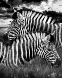 Zebras - Mint by Michelle A3