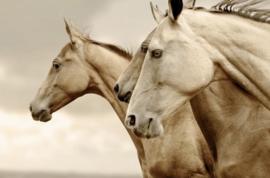 Sepia Horses REVERSE - Mint by Michelle Decoupage papier-A3