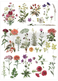 Decor Transfer Floral Collection