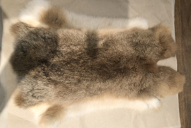 Konijn vel 17 wit bruin 35 x 55 cm
