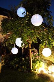 5 x LED lampje - Warm wit
