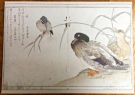 """15  verschillende wenskaarten met envelop  """"Koor van Vogels"""" met ontwerpen van Utamaro in luxe kado doos."""