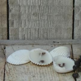 Kaars in schelpje 4 stuks