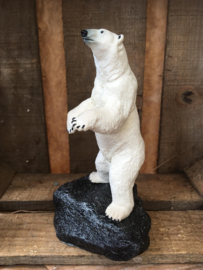 Standing icebear on a rock