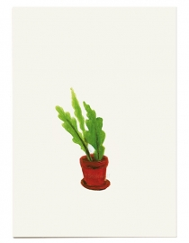 postcard 'Epiphyllum'
