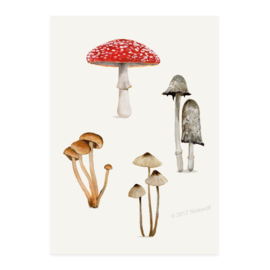 mini print | Paddenstoelen