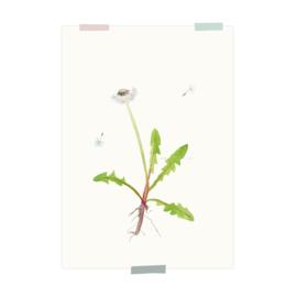 print | Dandelion