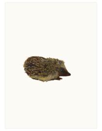 print | Hedgehog