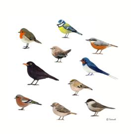 Tuinvogels (2016 - 2017)