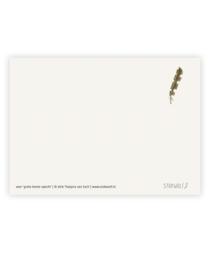 postkaart 'Veer grote bonte specht'