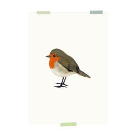 print | Robin