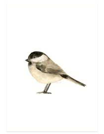 Marsh tit aquarel