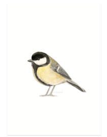 Great tit aquarel