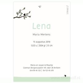 geboortekaartje | Berkenboompjes herfst (mint)
